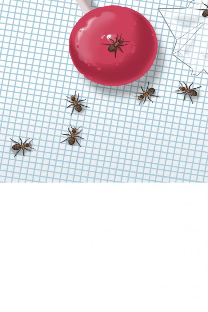 Duftspur Ameisen